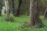 terrain boisé poster
