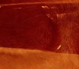 natural fur poster