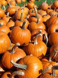 close up pumpkin patch poster