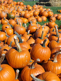 macro shot pumpkin patch background poster