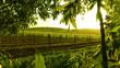 framed vineyard