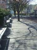 benches on park boardwalk poster