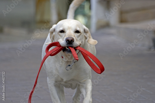 happy dog running in the street