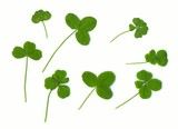 clover leaves. three, four and  five leaves - for success (natur poster