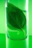 herbal essences poster