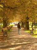 park alley in autumn poster