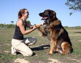 amitié canine poster
