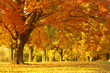 canvas print picture autumn scene