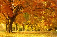 """Постер, картина, фотообои """"autumn scene"""""""