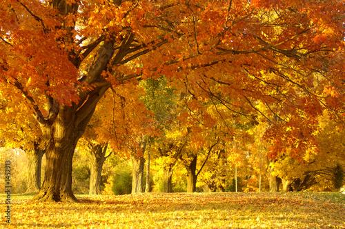 Leinwanddruck Bild autumn scene