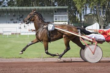 course de chevaux - trotteur