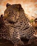 Fototapete Saeule - Afrika - Säugetiere