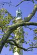 new york civil war monument, chattanooga