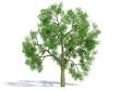 arbre solo