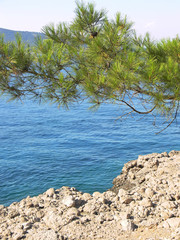 pine-tree branche neddles