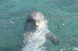 dolphin head shot, cute poster