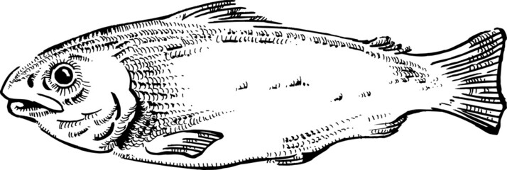 vintage style fish vector illustration