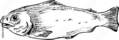 vintage style fish vector illustration