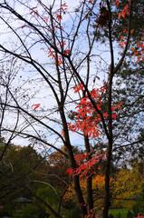 fall tree 3