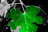 green leaf veins poster