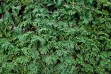fir tree needles texture poster
