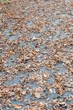autumn foliage background poster
