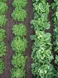 rangs de salade poster