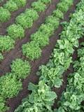 rangs de salades poster