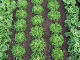 rang de salades