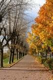 autumn alley poster