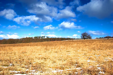 winter - spring meadow