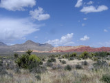 red rock canyon #16