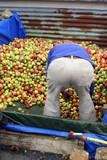 pommes pour cidre poster