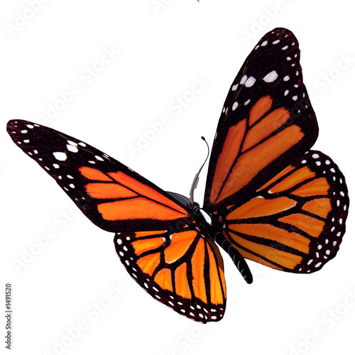 Deurstickers Vlinder bullterfly