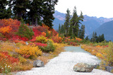 path in the fall foliage poster