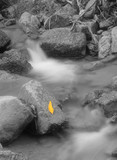 yellow leaf in stream poster