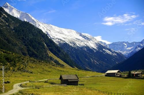 Leinwandbilder,alpen,tirol,bäume,landschaft