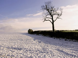 winter landscape snow on fields bare tree and barn poster