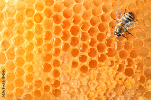 Tuinposter Bee bee on honeycomb