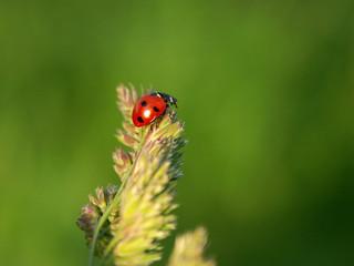 ladybird on a cone