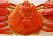 japanese red spider crab