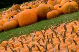 autumn decoration - pumpkin patch poster