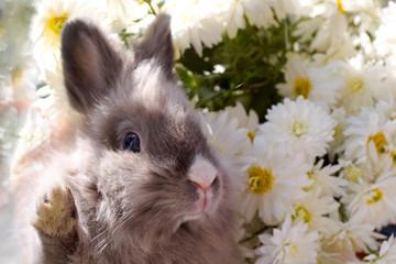 bunny among the flowers