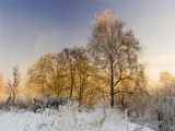 winter landscape about a frosty sunny day poster