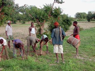 les cultures au burkina faso