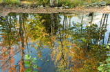 fall colorful trees reflected in pond poster