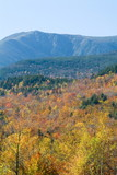 mt washington with fall colored trees poster