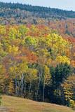 fall peak season foliage in new  hampshire poster