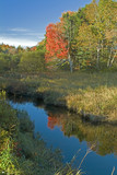 peak season fall tree and maine stream poster