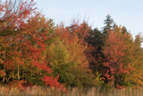 fall foliage in bar harbor maine poster